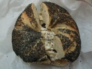 Absolute Bagels: Poppy w/ Walnuts Raisin Cream