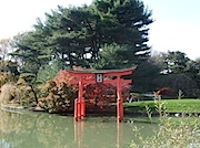 Brooklyn Botanic Garden:紅葉 日本庭園